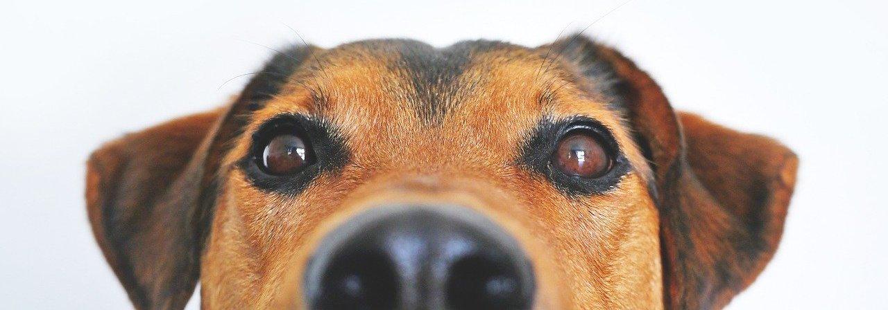 Mikroimmuntherapie bei Tieren